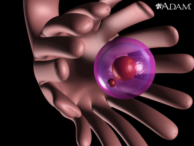 <div class=media-desc><strong>Ovulation</strong><p>This animations shows the process of ovulation (the release a single egg cell from an ovary).</p></div>