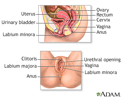 In Depth Reports Cervical Cancer