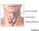 Parathyroidectomy - normal anatomy