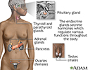 Endocrine glands