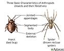 Arthropods - basic features