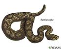 Venomous snakes - Series