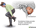 Cerebellum - function
